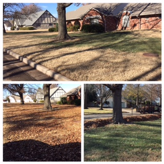 We make your yard look great!