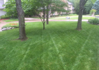 Lawn Maintenance is our Specialty